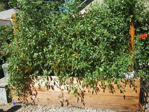 tomato wall