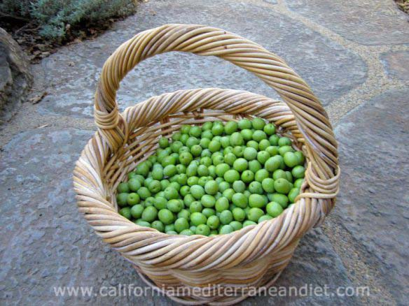 bucket-of-fresh-picked-olives w